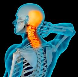 Anatomy-of-neck-pain